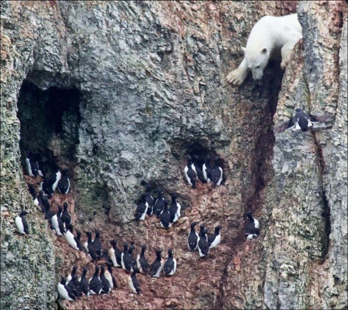 Hungry Bear in Insane 300ft Climb (6 pics)