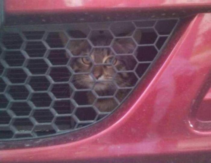 Spot The Cat (3 pics)
