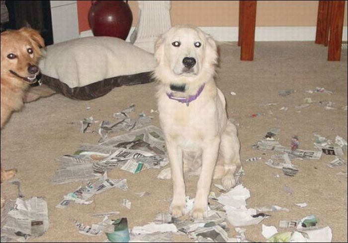 Damage Caused By Pets (35 pics)