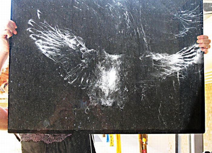 Incredible Birds Impressions On Window Glass (12 pics)