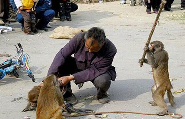 Amazing Animals Who Act Like People (44 pics)
