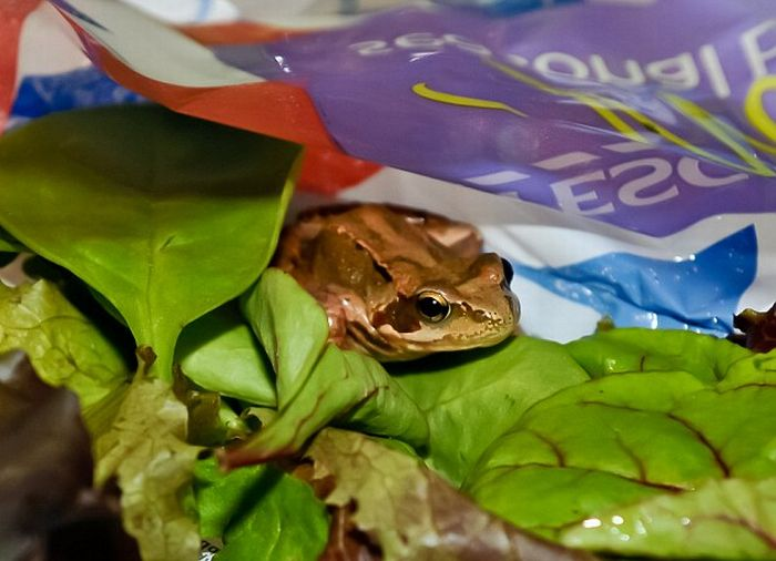 Unexpected Surprise in a Bag of Salad (3 pics)