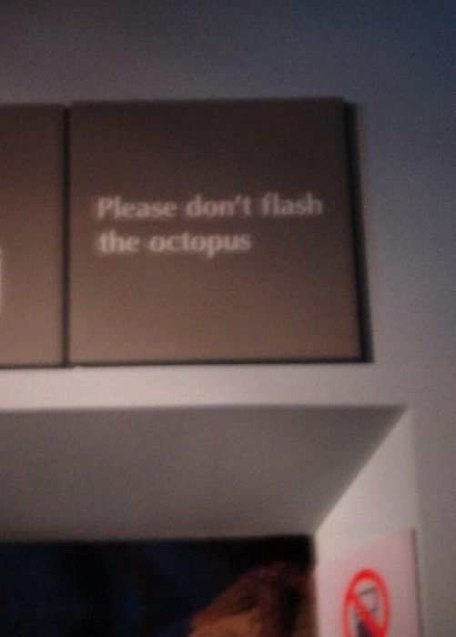 Hilarious Examples of English Gone Wrong (40 pics)