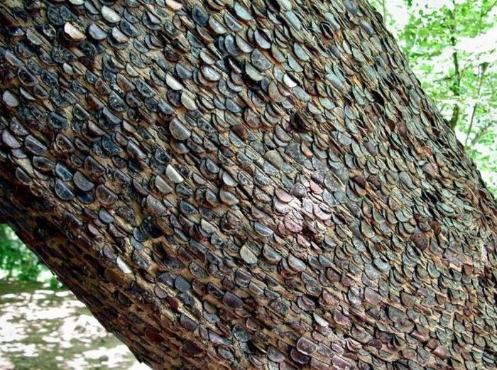 Money Tree That Brings Good Luck in Great Britain (12 pics)
