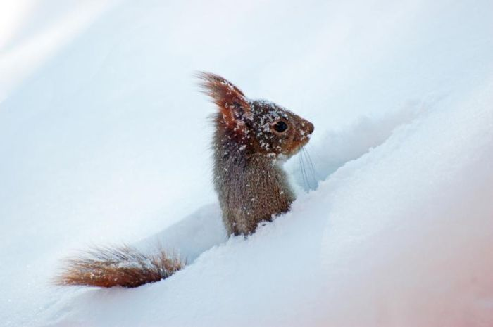 Awesome Squirrels (100 pics)