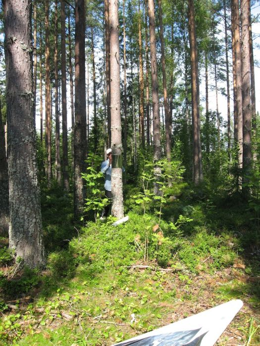 Invisible Trees in Forest Prank (7 pics)
