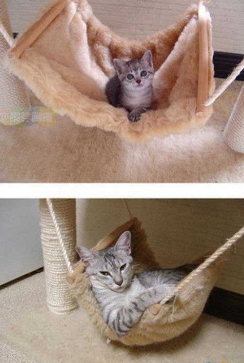 The Story of Two Cats Growing (15 pics)