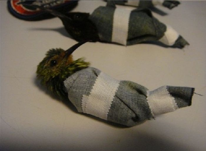 The Craziest Scheme to Smuggle Hummingbirds (5 pics)