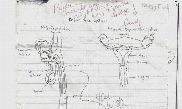 Best Anatomy Homework Ever (1 pic)