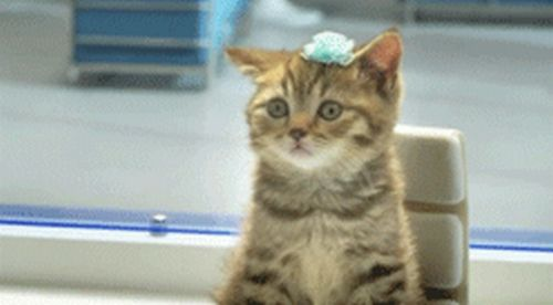 Great Cat GIF Animation (8 gifs)