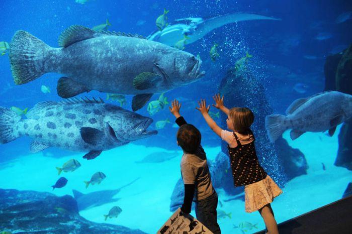 Incredible World's Largest Aquarium in Atlanta (25 pics)