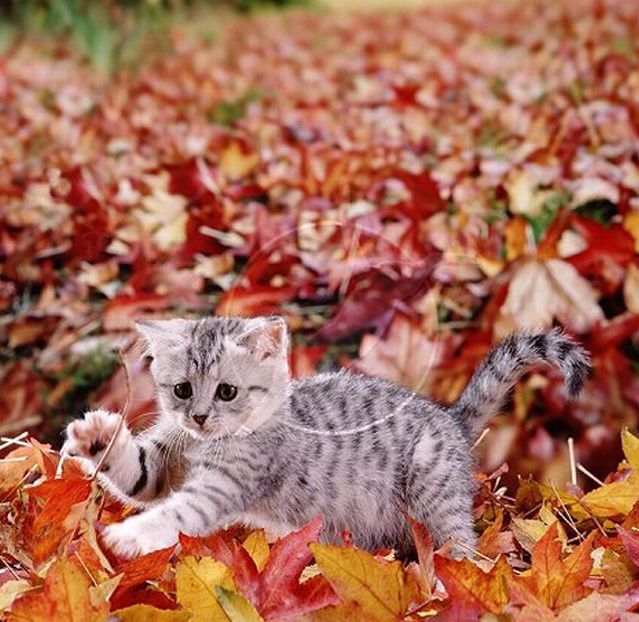 Cats Love Fall (20 pics)
