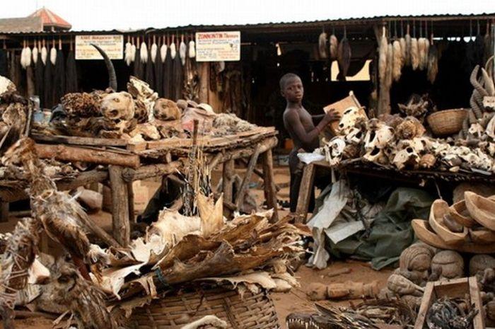 Voodoo Supermarket in Togo (7 pics)