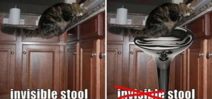 Invisible Cat Activities Made Visible (10 pics)