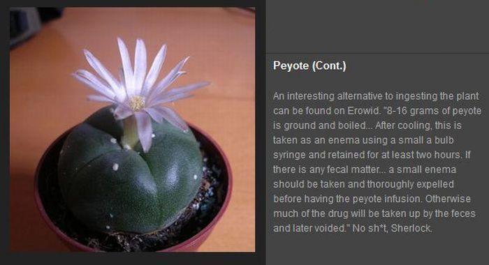 Psychedelic Plants (10 pics)