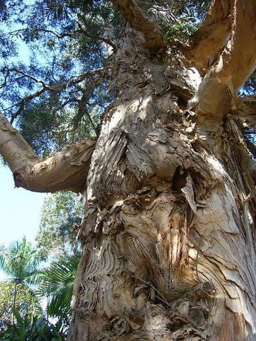 Creepy Trees (30 pics)