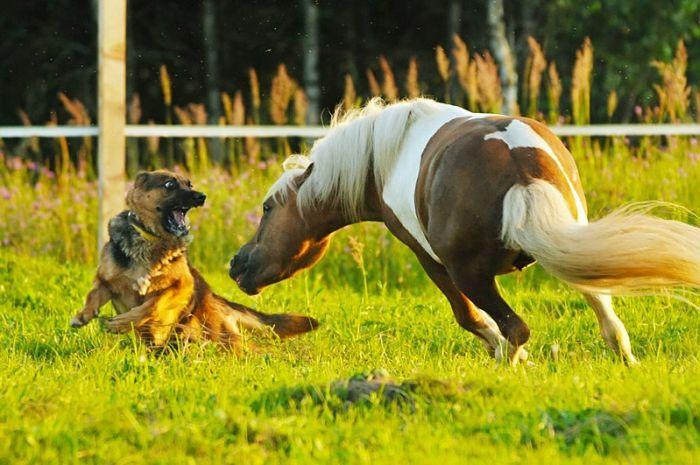 жопастые кобылы фото