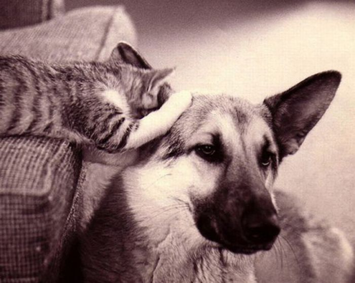 Pets are Whispering (16 pics)