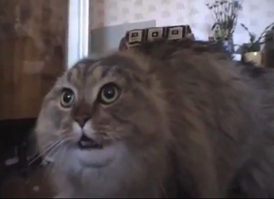 Awesome Speaking Cat Remix