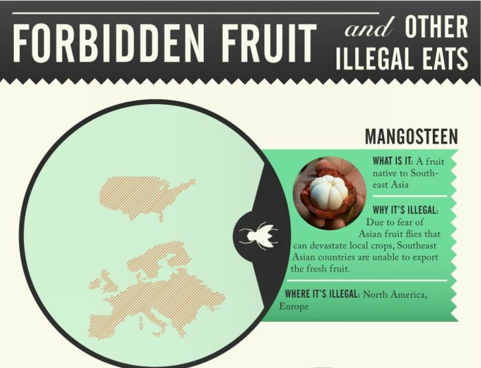 Forbidden Fruit & Other Illegal Foods (infographic)