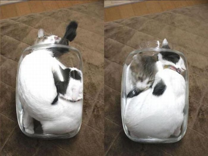 Two Cats One Jar (4 pics)