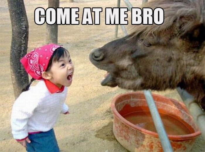 """Come at Me, Bro!"" Memes (56 pics + 8 gifs + 1 video)"