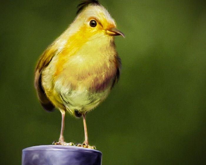 Real Life Angry Birds (7 pics)