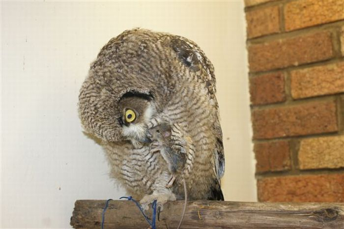 The Caring Owl (24 pics)
