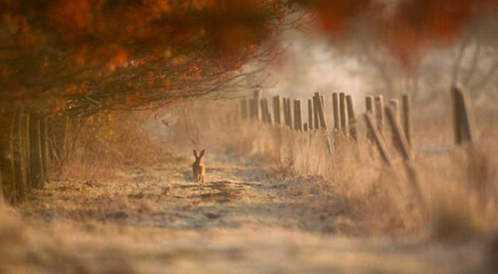 2011 Best Wildlife Photos (33 pics)