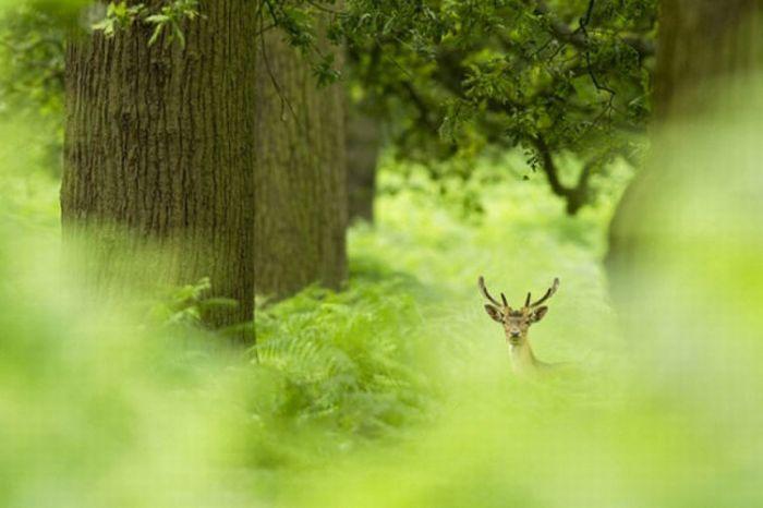 2011 Best Wildlife Photos (33 pics)