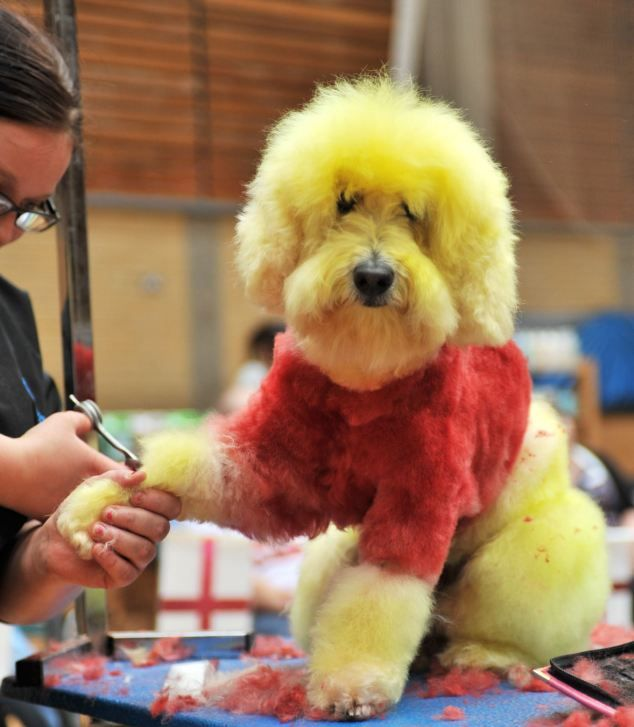 Creative Dog Grooming (8 pics)