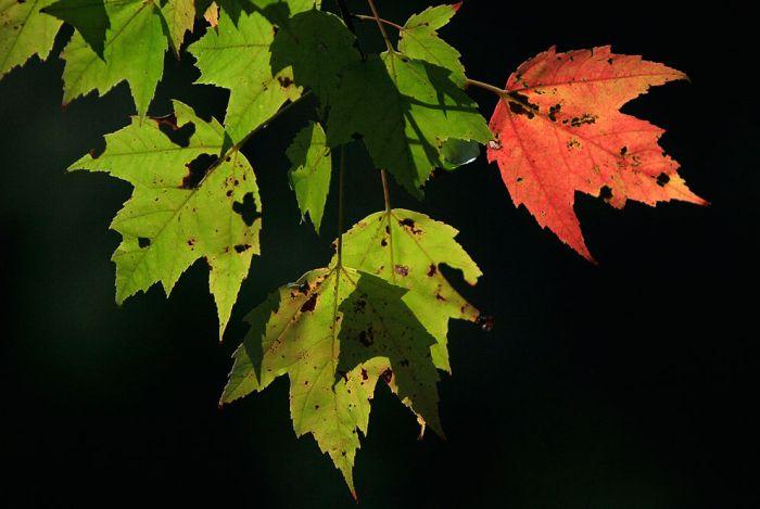 Fall Mood (39 pics)