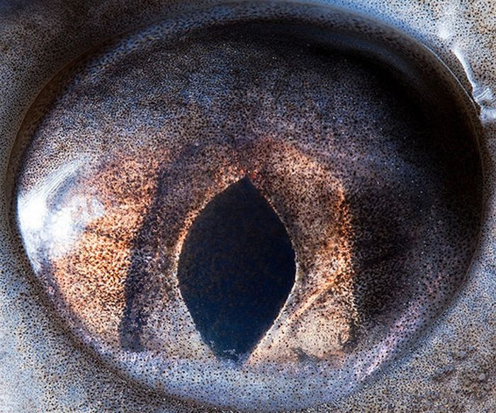 Animal Eyes (15 pics)