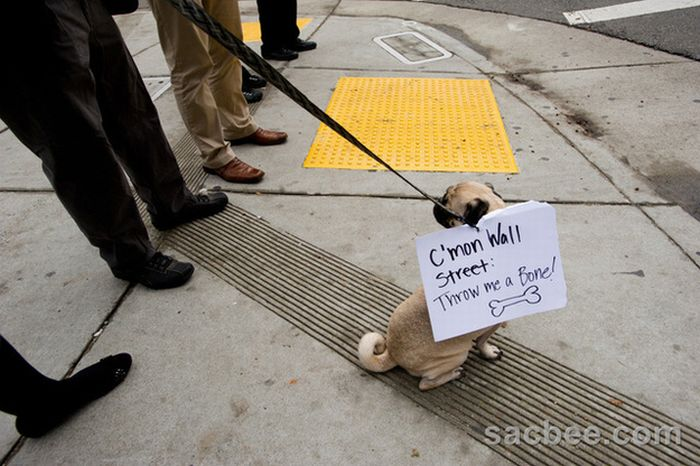 The Dogs Of Occupy Wall Street (20 pics)