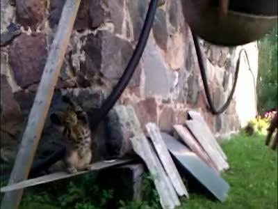 Сute Cat Plays Basketball