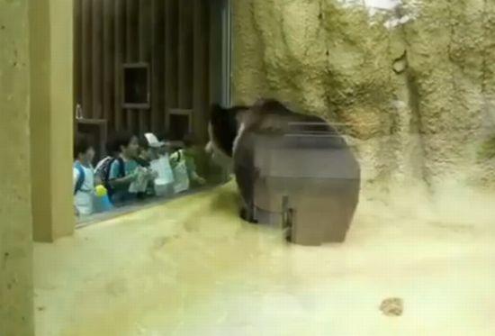 Hilarious Hip-Hop Bear Dance