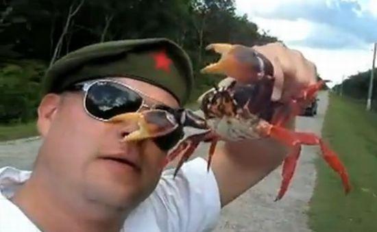 Crab Grabs Dude's Nose