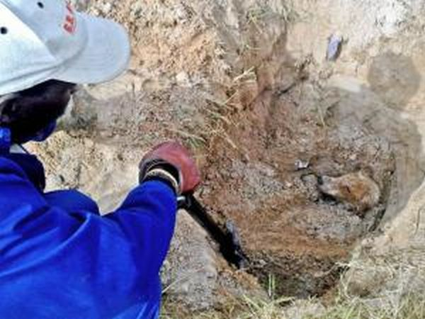 Dog Buried Alive in South Africa (5 pics)