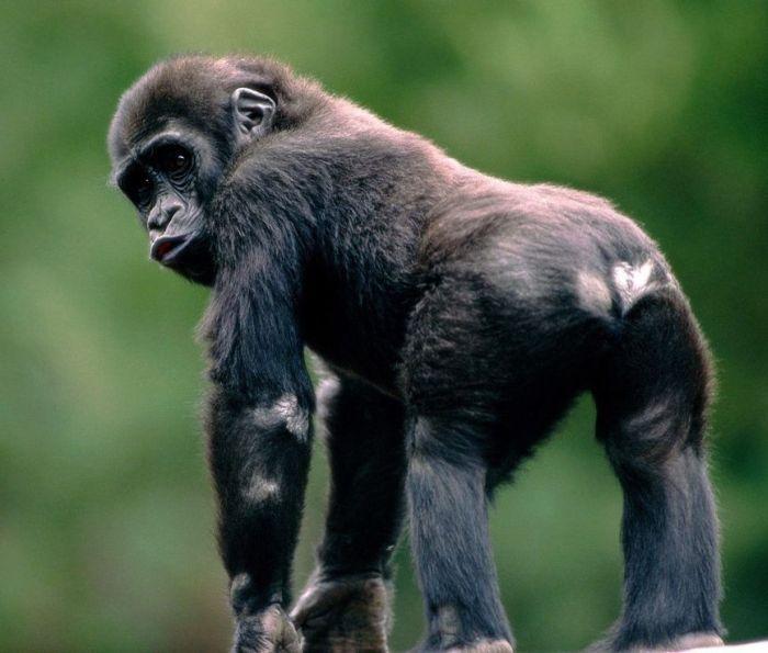 Amazing Animal Pictures (50 pics)