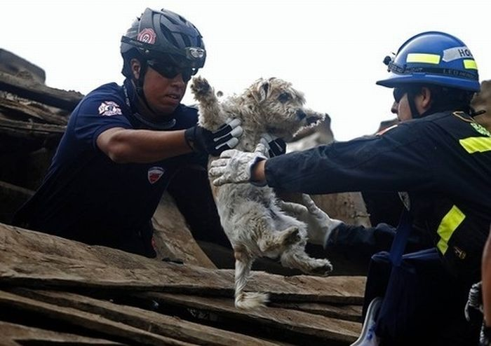 Animals Being Rescued (27 pics)