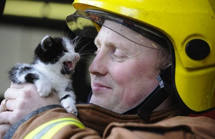 23 heartwarming photos of firefighters rescuing animals