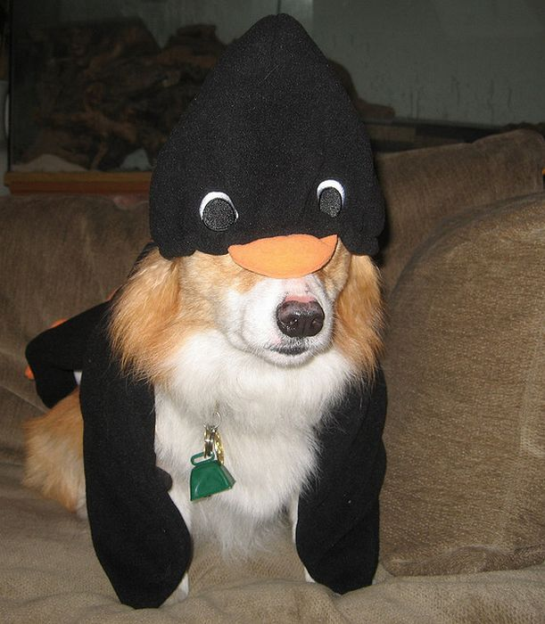 Corgis In Costumes (90 pics)
