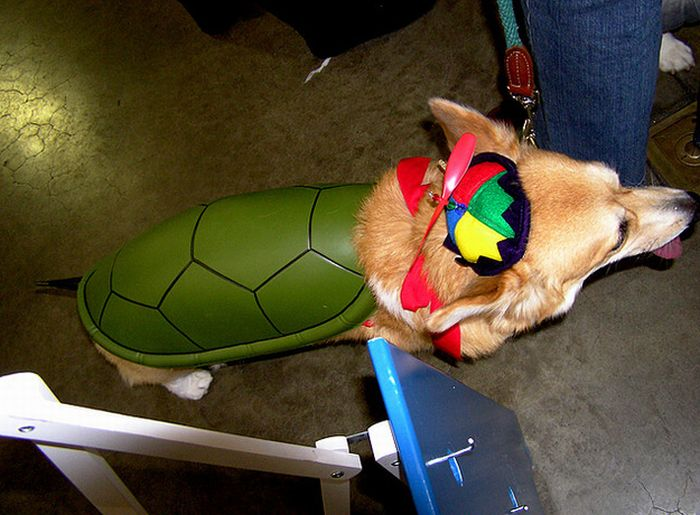 Corgis In Costumes (90 pics)