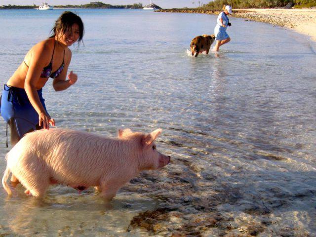 Unusual Tourists Invade Bahamas (29 pics)