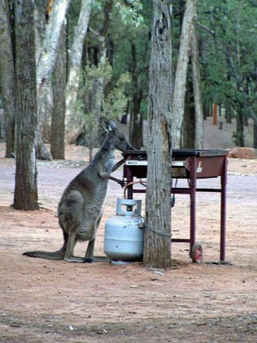 Only in Australia (63 pics + 2 gifs)