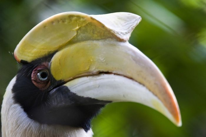 Awesome Birds (41 pics)