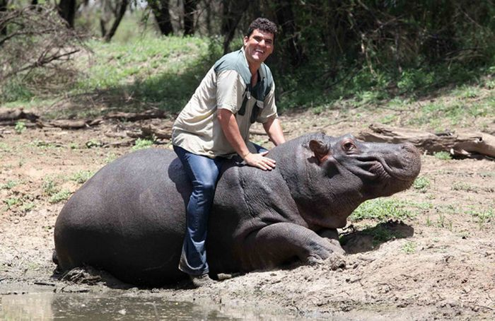 Marius Els killed by His Pet Hippo (7 pics)