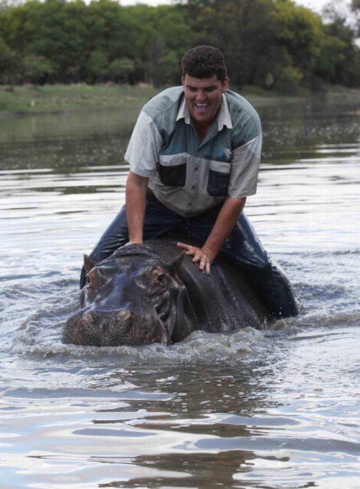 Marius Els killed by His Pet Hippo (7 pics)