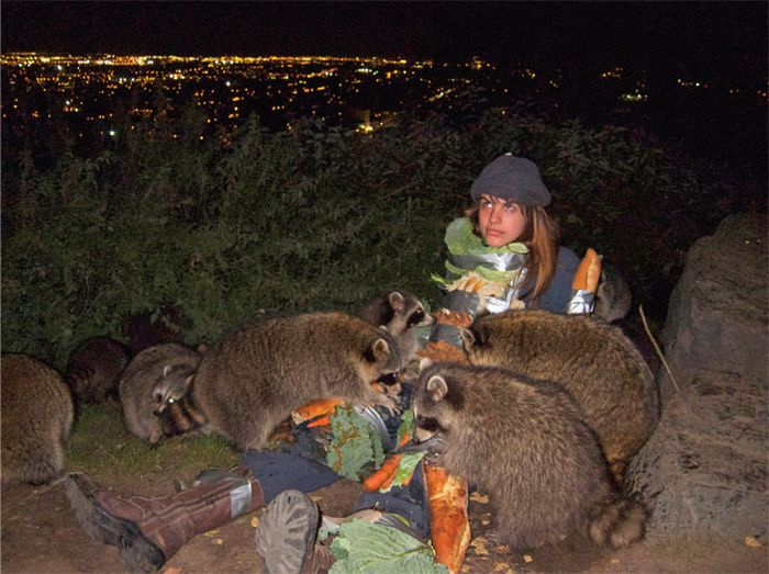 How to Feed a Bunch of Raccoons (5 pics)