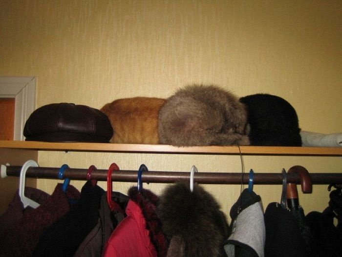 Find a Cat. Giant Collection of 'Find a Cat' Pictures (47 pics)